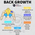 The back consists of a lot of muscles. I listed some here
