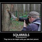 Squirrel Humor