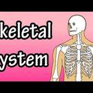The Skeletal System - Skeletal System Functions - Skeletal System Basics