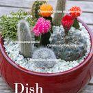 Make a Cactus Dish Garden