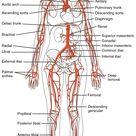 Circulatory Pathways - OpenStax CNX