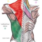 Extrinsic Muscles of the Shoulder | Geeky Medics