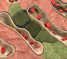 Portal Vein Anatomy, Function & Definition | Body Maps