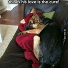 Dogs, what did we do to deserve you? (Dog lovers) - Animals