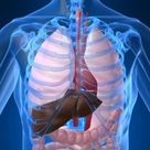 Fast Ways to Lower Elevated Liver Enzymes Naturally