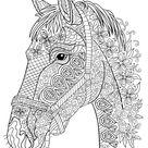 paardenhoofd volwassenen