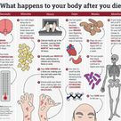 Here's what happens to your body after you die
