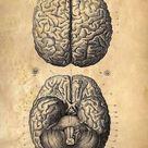 Digital Download Brain Games Brain Anatomy Sepia You Print Digital Image