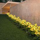LED Solar Sunflower Lamps Garden Lawn Lamp Patio Porch Backyard - 10pcs Yellow