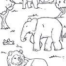 Malvorlage Tiere Afrika - Kostenlose Ausmalbilder