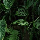 Rainforest Plants