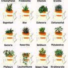 Pflegeleichte Zimmerpflanzen: Unsere Top 10 für Wohnung & Haus - Plantura