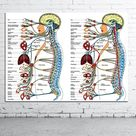 Human Science Human Body Organs Medical Knowledge Canvas Poster Printing Custom Decor Hospital Poster Wall Pictures Education - 45x60cm no frame