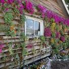 Pallet Garden Walls