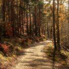 Autumn in the forest (Germany) // Herbst im Wald (Deutschland) by christinewirges cr.🇩🇪