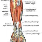 Tennis Elbow Relief | Phoenix Bioperformance - KinetiCream