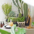 Terrarium Plants For Sale
