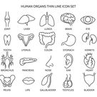 Human organ line icons