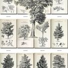 BOTANICAL-9-bw Collection of 359 black-and-white vintage TREES | Etsy
