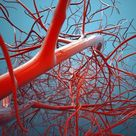 10 Amazing Facts About Your Blood Vessels   Everyday Health