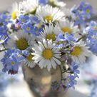 Kleine Blütenwunder Vergissmeinnicht - Gartenzauber
