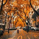 Fall iPhone Wallpapers - 30 Cute Fall iPhone Background Ideas for FREE