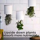 DIY Hacks for indoor plants.