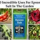 Epsom Salt For Plants