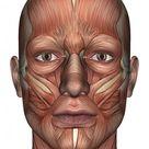 Cara de anatomia masculina