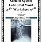 Skeletal System Latin Root Word Worksheet