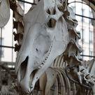 Horse skull by CitronVertStock on DeviantArt