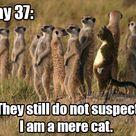 A mere cat...
