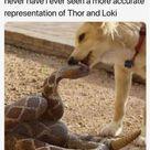 Marvel Memes - -13-