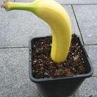 Alles Banane oder was? - Das Grüne Netzwerk