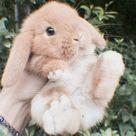 bunny quiz >.<