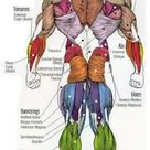 Body Building Workouts