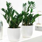 Indoor plants for dark corners!