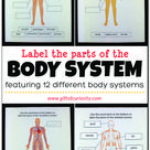 Label the Parts of the Human Body: