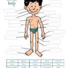 Human Body Cut and Paste Activity & Diagram