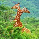 Africa Travel