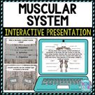 Muscular System Interactive Google Slides™ Presentation   Digital