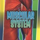 Muscular System | Indianapolis Public Library