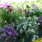 Einen Balkonkasten sommerlich und bienenfreundlich bepflanzen › Velanga
