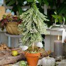 Herbstdeko mit Heidekraut