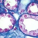 Histology tissues Flashcards