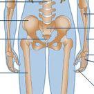 Science & Nature - Human Body and Mind - Anatomy - Skeletal anatomy