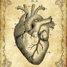 5x7 Victorian Goth Steampunk Antique Anatomy Heart  | Etsy