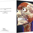 Human head with bone, muscles and circulatory system. Greetings Card. Human head with bone, muscles and circulatory system.