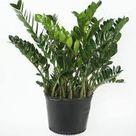 Kwiaty Doniczkowe Wiecznie Zielone Gronne Planter Blomster Planter