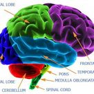 Stem Cells Linked to Cognitive Gain After Brain Injury - Nov. 4, 2013 ? A stem cell therapy previous by drldf